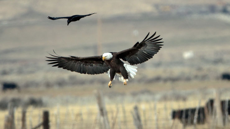 Carson Valley Eagles and Agriculture